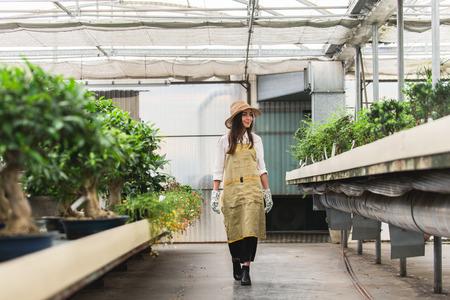 Hübsche Gärtnerin, die sich um Pflanzen in ihrem Blumen- und Pflanzenladen kümmert - Asiatin, die in einem Gewächshaus arbeitet
