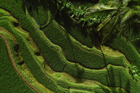 Aerial drone view of the rice terraces in Bali. Wanderlust travel concept