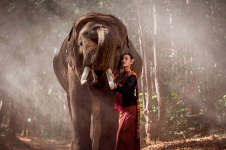 Elephant with beautiful girl in asian countryside, Thailand - Thai elephant and pretty woman with traditional dress in Surin region