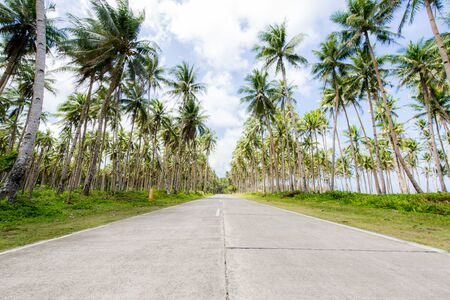 Landscape of green tropical forest with many coconut palm trees - Coconut forest on Siargao Island, Philippines Reklamní fotografie - 128482186