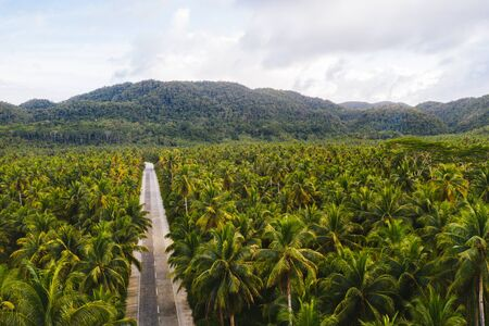 Landscape of green tropical forest with many coconut palm trees