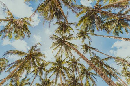 Krajobraz zielonego lasu tropikalnego z wieloma palmami kokosowymi Zdjęcie Seryjne