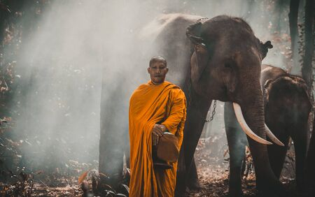 Thai monks walking in the jungle with elephants
