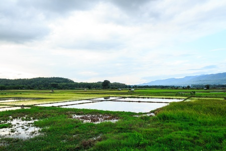 uncompleted rice field  in Thailand photo