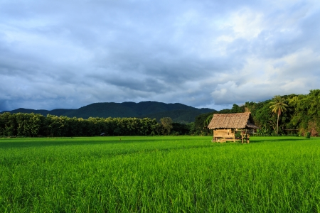Small hut in rice farm photo