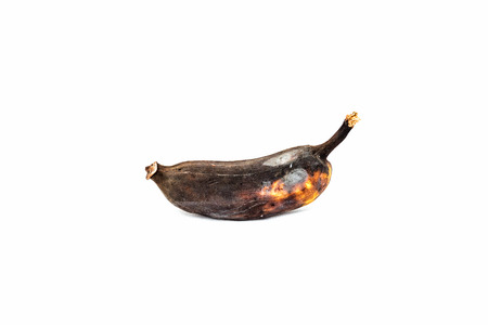 uneatable: Rotten banana on white background