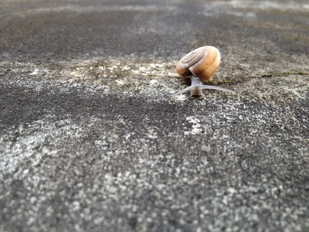 clamber: Il clamber lumaca sul muro di cemento. Archivio Fotografico