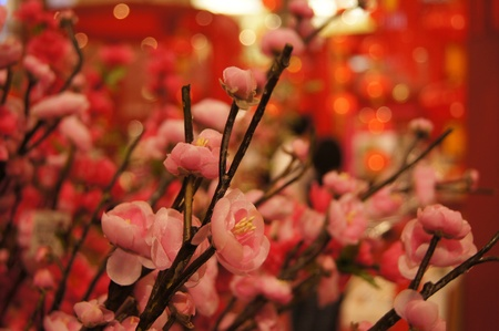 Peach blossom Traditional flower decoration, Spring festival - Chinese new year. Stock Photo - 8778712