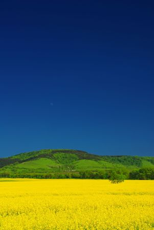 Vivid fresh yellow rape field, deep blue summer sky, green hill. Vertical picture