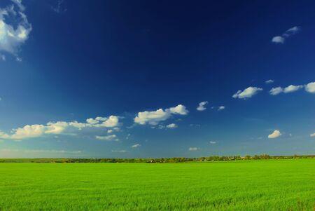 Vivid summer fields panorama Stock Photo