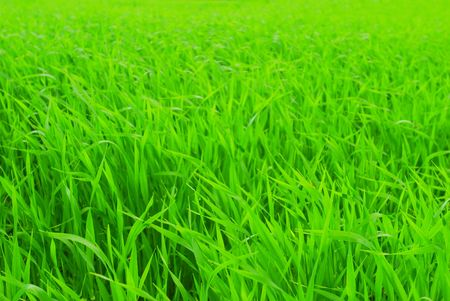 Perfect fresh green grass Stock Photo