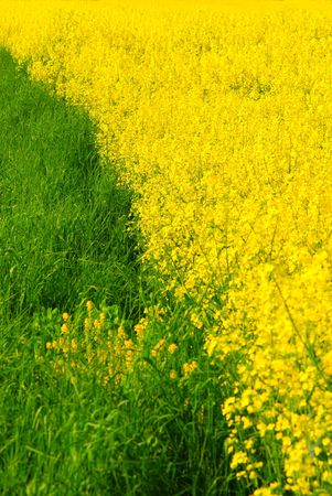 Fresh green grass and vivid yellow rape
