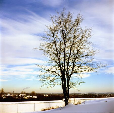 Alone tree. Winter solitude