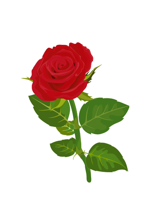 red rose: red rose vector illustrator