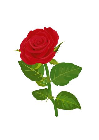 red rose vector illustrator
