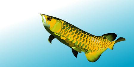 Arowana fish colorful vector illustrator.sacred fish