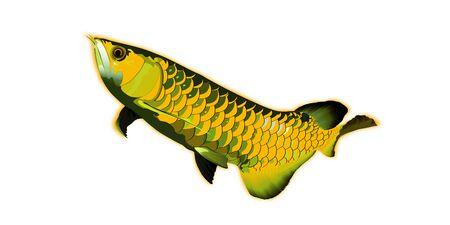 Arowana fish vector illustrator.sacred fish