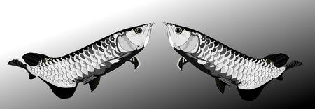 Arowana fish black and white vector illustrator.sacred fish