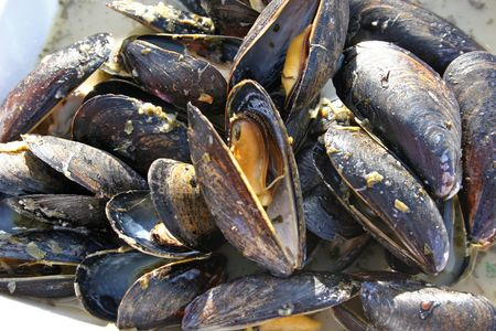 Cooked mussels ready to eat
