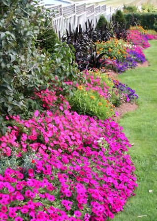 Mixed flower bed in front of a wooden fence.