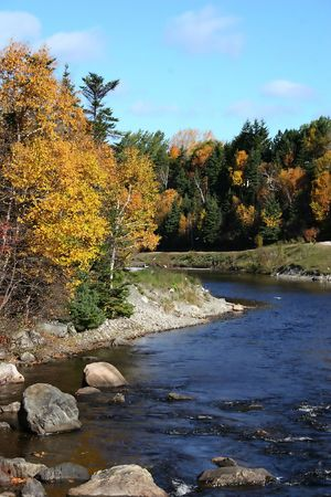 brilliantly: A Newfoundland river flowing by brilliantly colored deciduous birch and maple of the autumn forest.