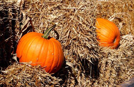 Fall pumpkins sitting amoungst bales of straw. photo