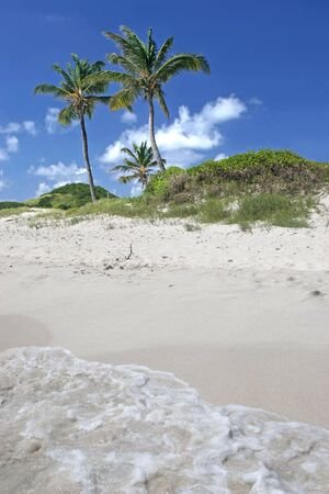 grenadines: Waves washing up on a beach of the Tobago Cays.