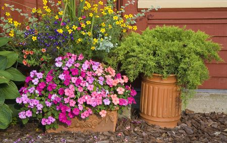 planter: Planters used in the summer garden filled with impatiens, juniper, lobelia, petunia, marigolds and more.