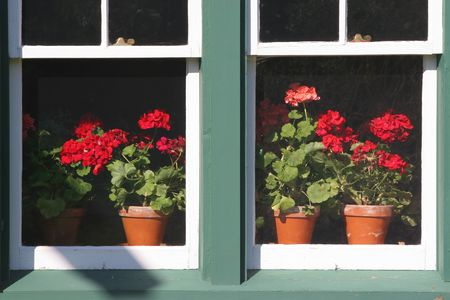 clay pot: Clay pots full of geraniums behind an old fashioned window. Stock Photo