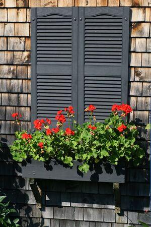 A flower box full of geraniums on shuttered windows.