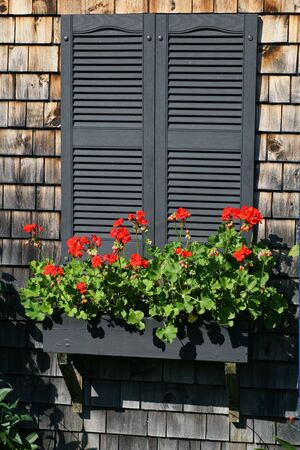planter: A flower box full of geraniums on shuttered windows.