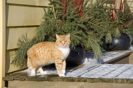 Cat on a snowy porch with outside Christmas decorations Stock Photo