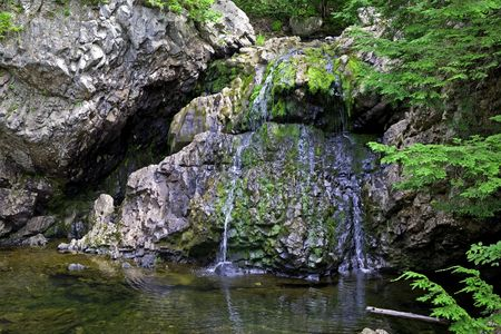 trickling: A small spring with its water trickling down over mossy rocks into a woodland pond.