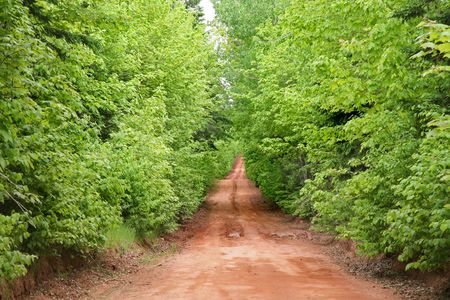 One of the beautiful red dirt back roads of Prince Edward Island in the spring. photo