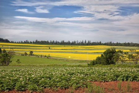 Fields of potatoes, canola and hay on rural Prince Edward Island. photo