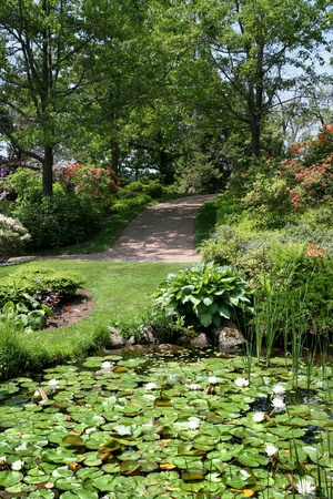 back yard pond: leading to a lily pond in a tranquil summer garden. Stock Photo