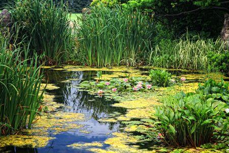 пышной листвой: Lush foliage surrounds a lily pond. Фото со стока