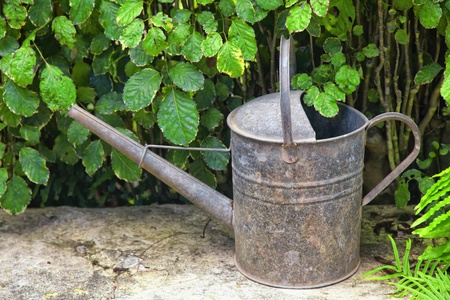 An old galvanized watering can sitting in the garden. photo