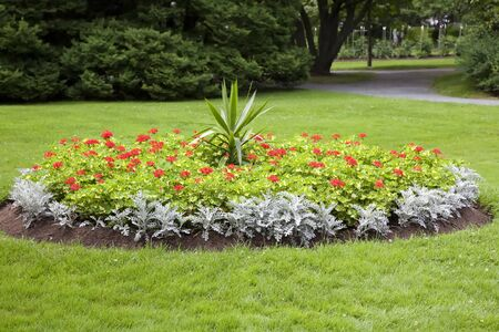 In a park setting, a round flower bed full of varigated geraniums, dusty miller and a tropical yucca in the center. Stock Photo - 9838347