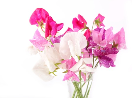 Sweet pea flowers in a glass vase.