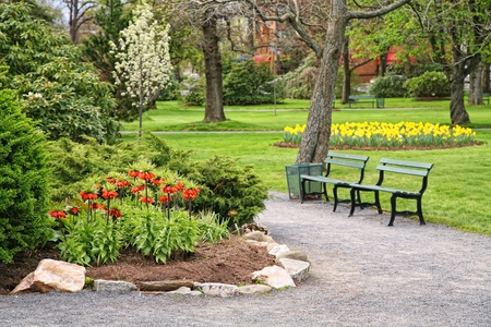 garden bench: Orange crown imperial flowers (Fritillaria imperialis)  in a park setting.
