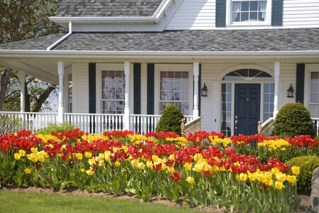 yellow house: A house with large flower beds full of tulips.