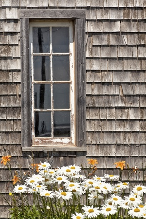 Daisies and daylilies in front of a rustic barn window.