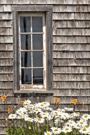 Madeliefjes en daglelies voor een rustieke schuur venster. Stockfoto