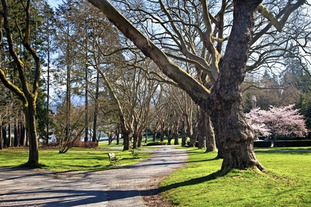 A walkway through Stanley Park, Vancouver, Canada in early spring. Stock Photo