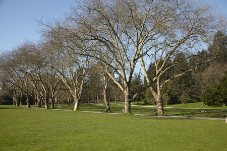 Rows of trees along a paved pathway in Stanley Park, Vancouver, British Columbia.