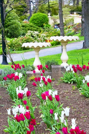 jardines con flores: Pilas para pájaros y los tulipanes en un Halifax, Nueva Escocia parque. Foto de archivo