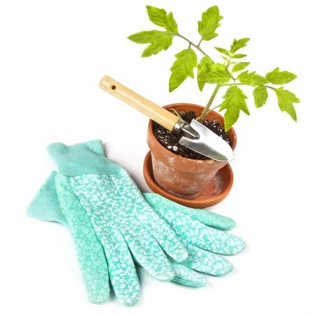 ollas barro: Guantes de jard�n, un jard�n y llana de una planta de tomate en maceta listo para plantar en el jard�n.
