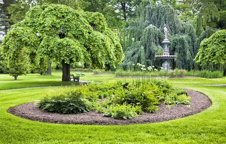 A Camperdown Elm (botanical name Ulmus glabra camperdownii) tree overlooks a perennial bed in a green garden.
