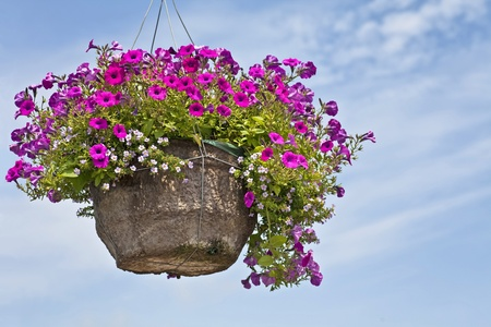 A large fiber hanging basket full of vibrant purple petunias against a blue sky.